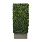 Artificial Boxwood Hedge 50 x 125 x 25cm
