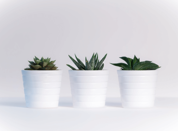 Row of succulents to show optical balance in window display design