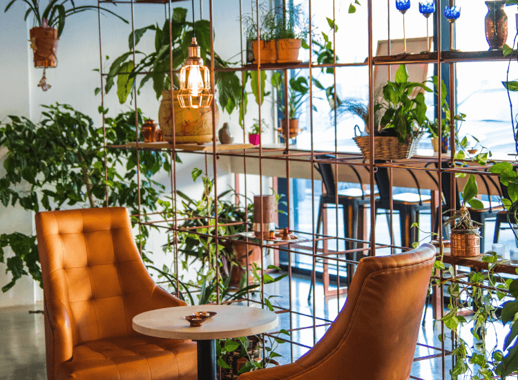 Wire shelving unit with houseplants and armchairs, creating a relaxed shopping atmosphere